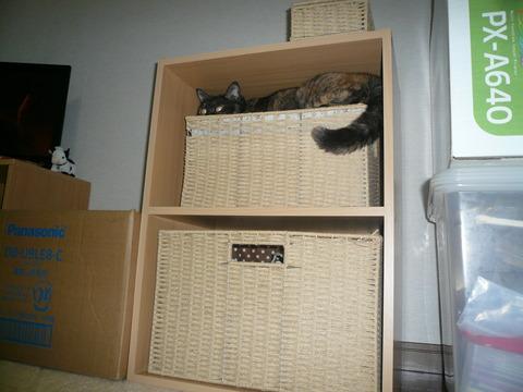 2二階の住人1