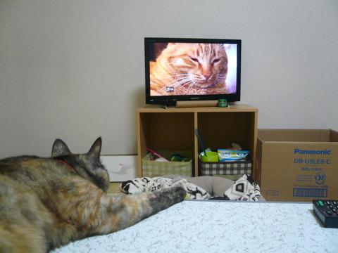 17テレビを見る1