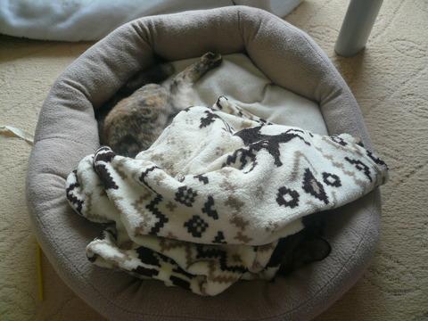 12猫ベッド2