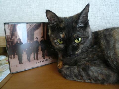 16ビートルズ猫