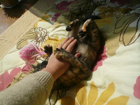 27私の手に猫キック(--;