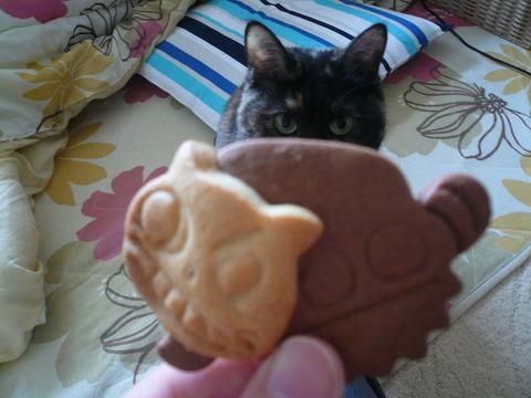 4猫バスクッキー1
