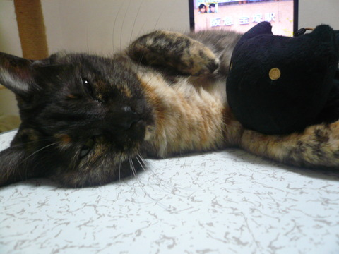 23黒猫さんと一緒3