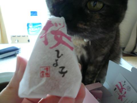 19桜ひよこ1