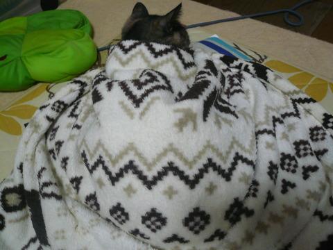 30毛布かけてみた2