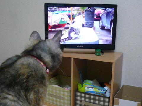 10猫を観る2