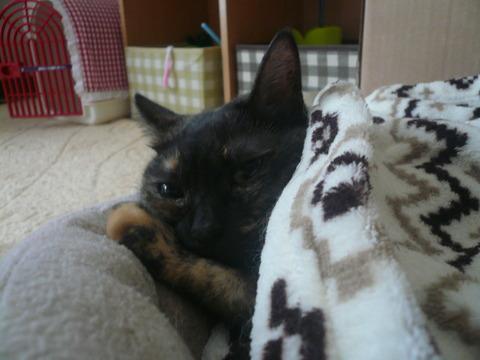 25猫ベッド2
