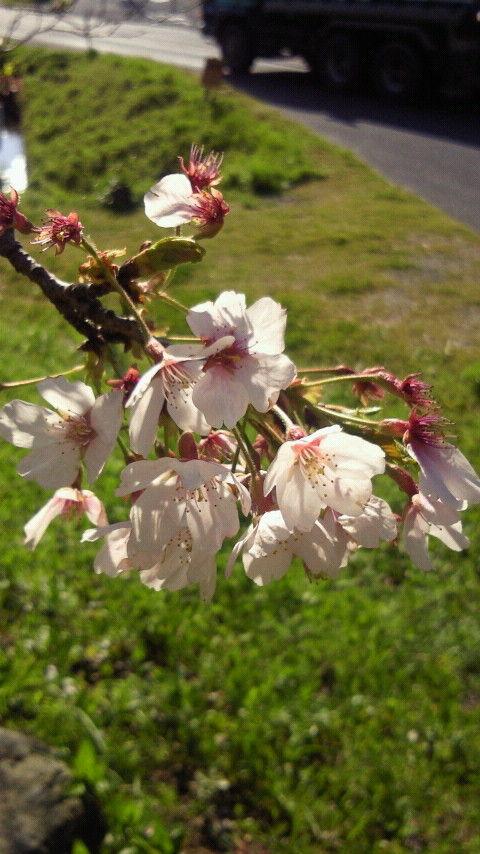 11お花見2