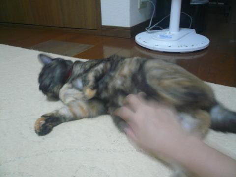 2お腹モフモフ2(猫キック)