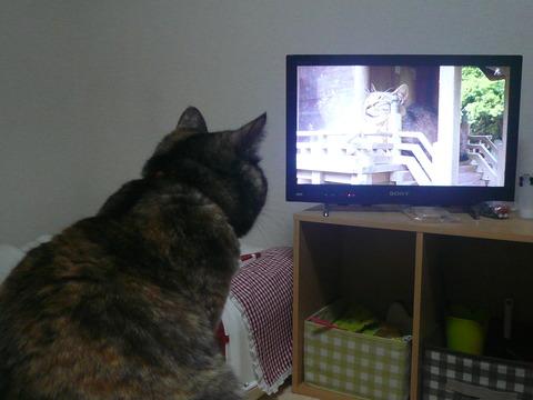 29テレビ2