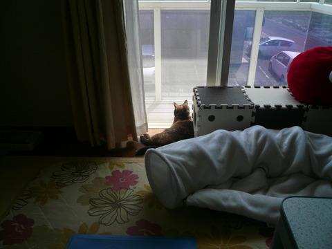 19窓辺のサビィ1