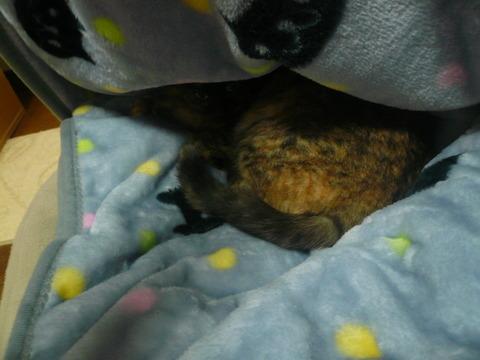 3毛布の下2