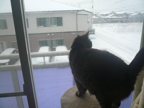 18雪が積もったにゃ!1