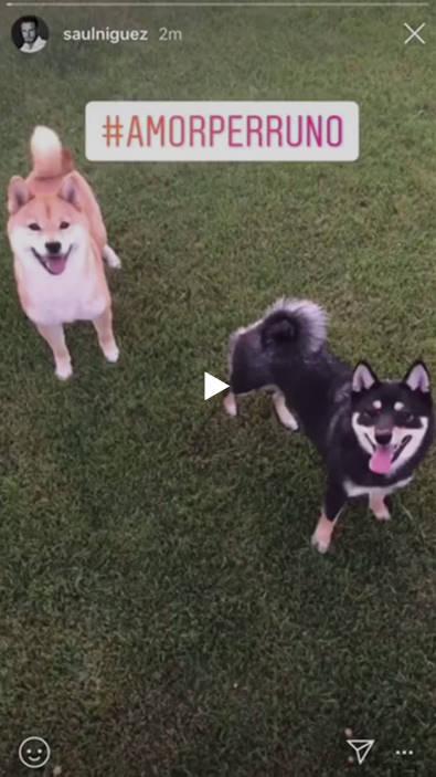 ◆リーガ◆トーレス師匠大好きで柴犬好きのサウル・ニゲス、新たに黒柴を飼い始める