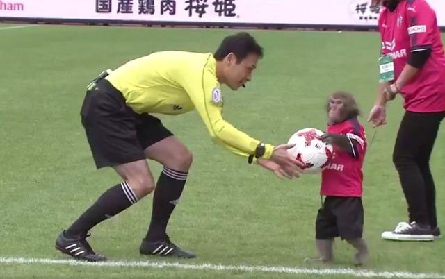 ◆Jリーグ◆C大阪戦の「モンキーパフォーマンス」を批判した動物保護団体って一体……