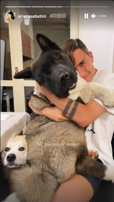 ◆悲報◆ユーベのイケメンFWディバラさん家の秋田犬カイア、新参の犬のお尻とテーブルに挟まれてディバラを奪われてしまう