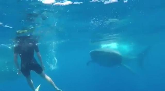 ◆奇跡?◆セルヒオ・ラモス、バカンス中の海でジンベイザメ2匹と遭遇して大興奮!