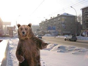 ◆ほのぼの◆世界初?ロシア3部でボールキッズをする本物の熊が可愛すぎて草(動画・画像)