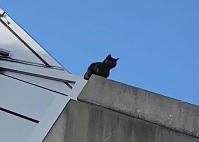 ◆悲報◆ノエスタの屋根に登った猫の「ミィちゃん」降りられず、1週間孤立