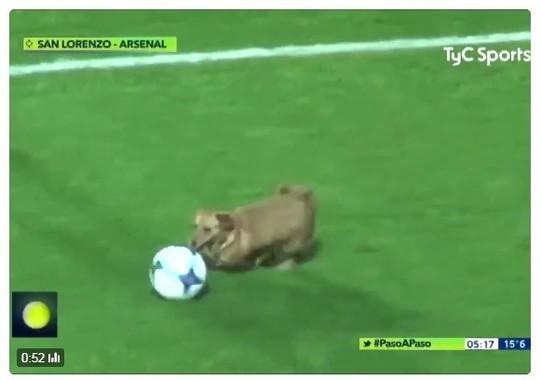 ◆南米◆試合中乱入してドリブルした小型犬が可愛すぎると話題に!試合後になぜか「インタビュー」
