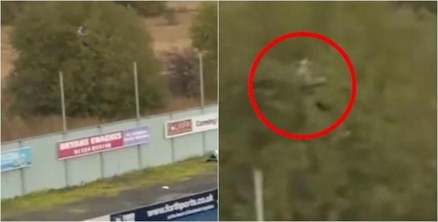 ◆スコットランド珍◆スタジアム外の木の上に緑装束で木に同化して試合観戦するサッカーファン発見される