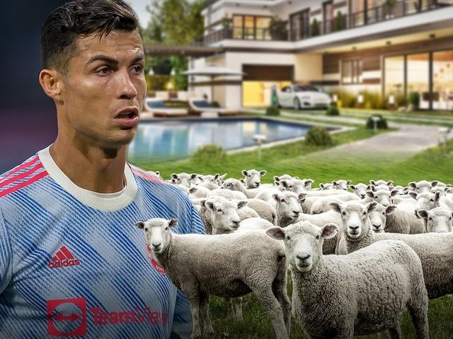 ◆悲報◆羊の鳴き声がうるさくて引っ越ししたクリロナさん、エブラにからかわれるwww