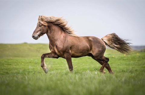 車とか無い世界で馬と二人旅がしたい