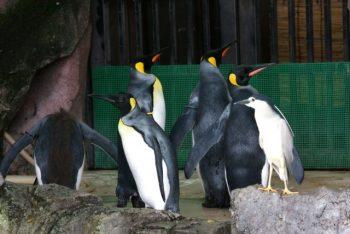ペンギンに紛れ餌を待つゴイサギ お前らが笑ったコピーをぺーinばいくちゃんねる板