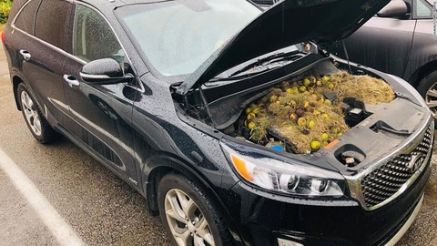 191008163603-02-walnuts-under-car-hood-super-169