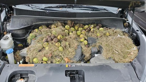 191008163538-03-walnuts-under-car-hood-super-169