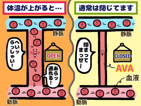 """""""AVA""""の仕組み"""