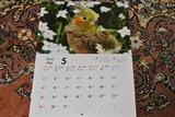 カレンダー発売2d