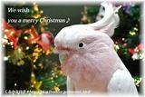 クリスマスカード2015(DSC_3760)