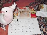カレンダー発売7a
