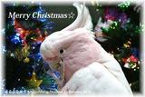 クリスマスカード2015(DSC_3936)