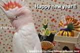 俺の新年(お正月(DSC_2533)カード)