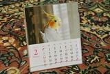 カレンダー発売4c