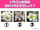 3択クイズ
