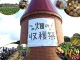旬野菜の収穫