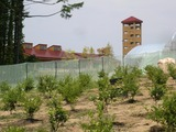 0718果樹園