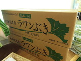 3kg箱ラワンぶき