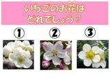H29いちご3問クイズ