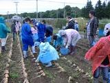0918収穫祭たまねぎ