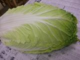 くるる白菜3