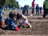 0513畑の学校5
