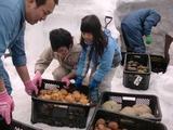 0317雪中野菜5