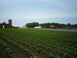 0615体験農場