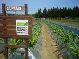 0615とうきび畑