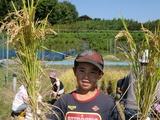 0923稲刈り3