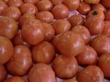 0225トマト2